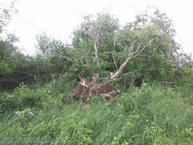 Разрушенията след торнадото в село Белоптичене
