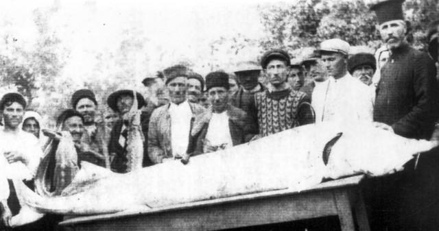 Най-голямата моруна уловена в село Връв - дълга 5 метра и тежка 394 килограма