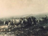 Транспортиране на провизии 1878