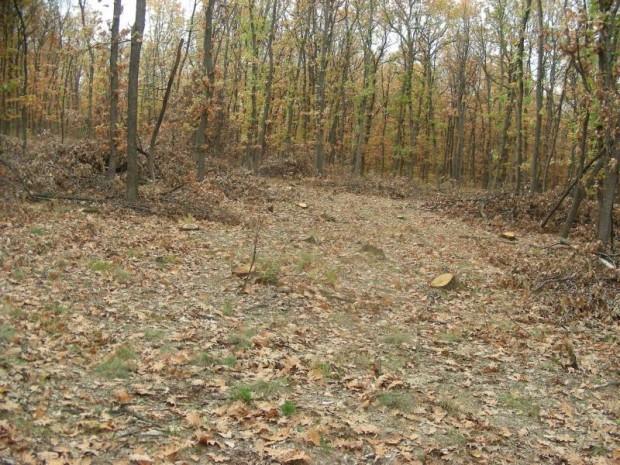 В частна горска територия в землището на видинското село Подгоре са установени 16 незаконно отсечени дървета