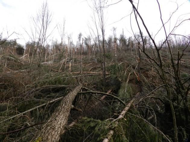 Последствие след обледяване на горите