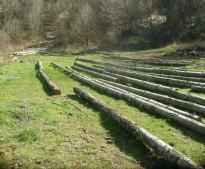 Видинската гора се намира в Румъния и Гърция