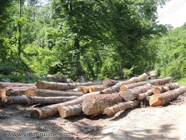 Дървени трупи