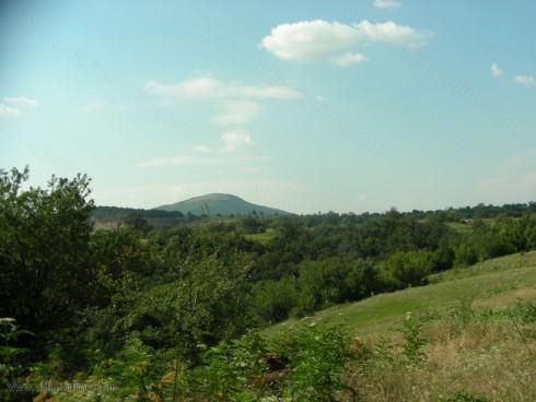 Има незаконна сеч около село Киреево