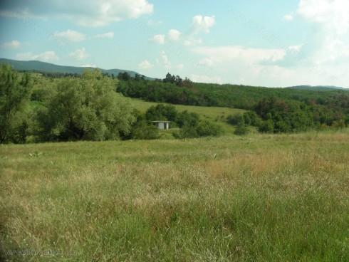 Пътят между селата Киреево и Раковица е почти закрит от непочистени дървета и храсти
