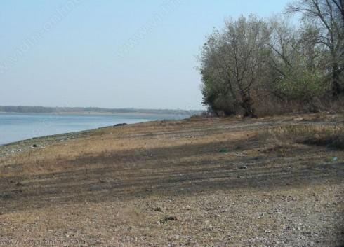 Намалява популацията на есетра в река Дунав, според видински рибар