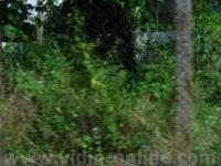 село Ошане