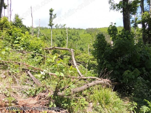 Унищожена гора