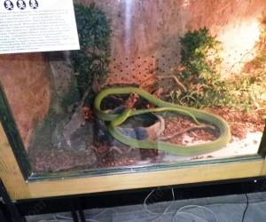 Изложба на змии във Видин