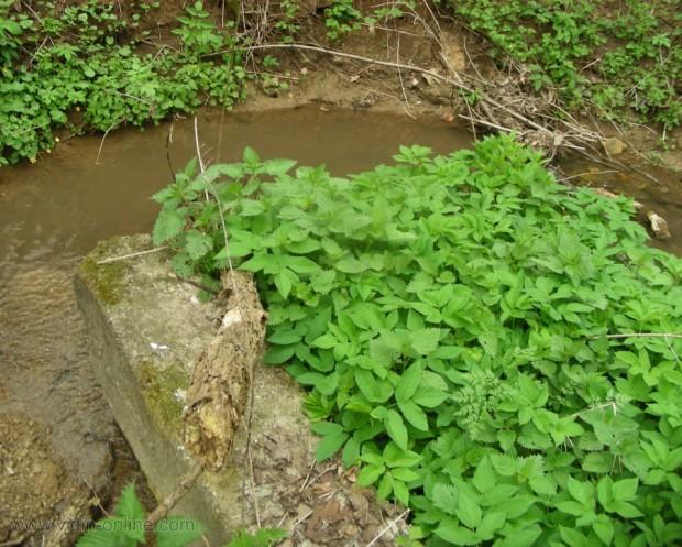 Приток на река Тополовец