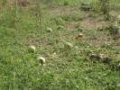 градушка в с.Бело поле