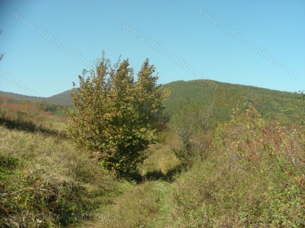 връх Ветрен до село Крачимир